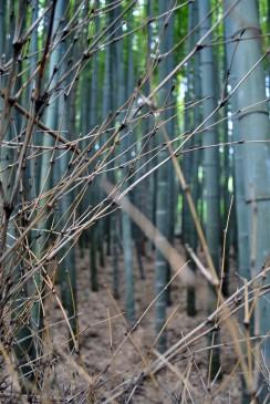 50_Bamboo_7