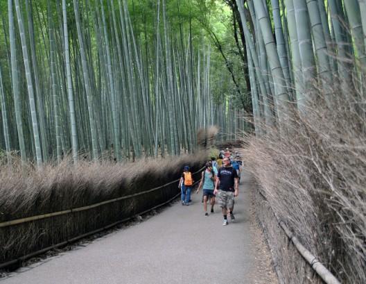 51_Bamboo_8